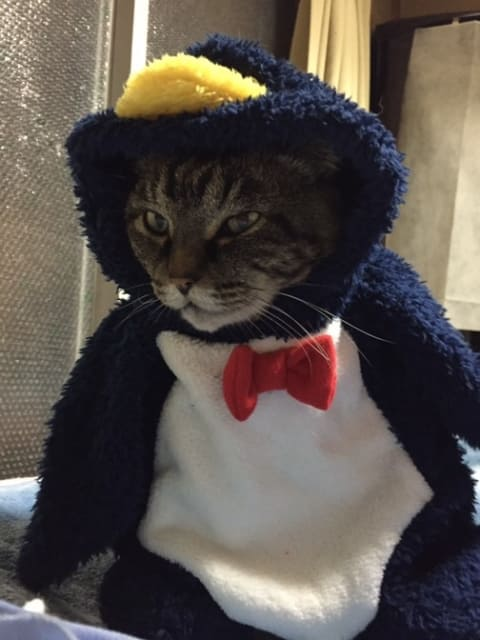 ペンギンの着ぐるみを着た猫
